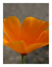 fotomatte.com